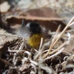 Caterpillar in mongolian steppe