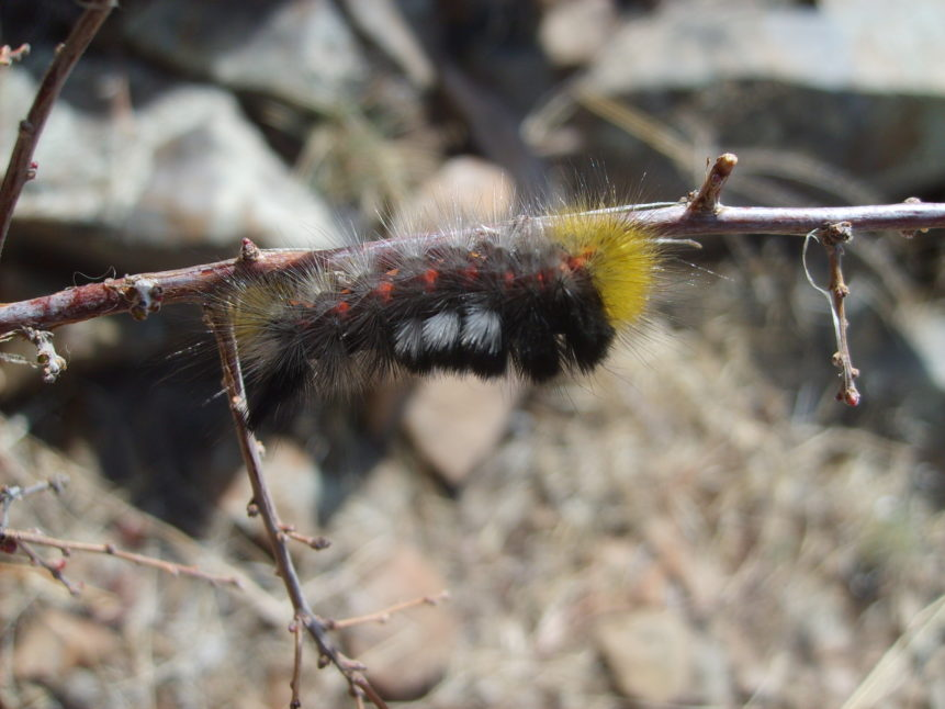 Free photo: Caterpillar in mongolian steppe