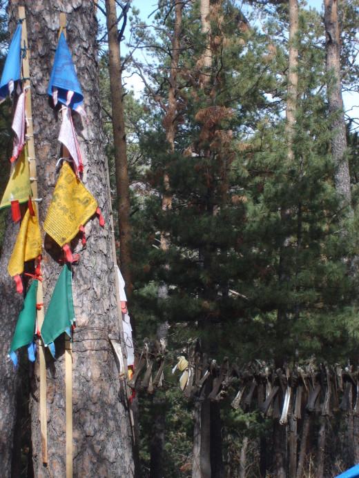 Shamanic tree in Mongolia