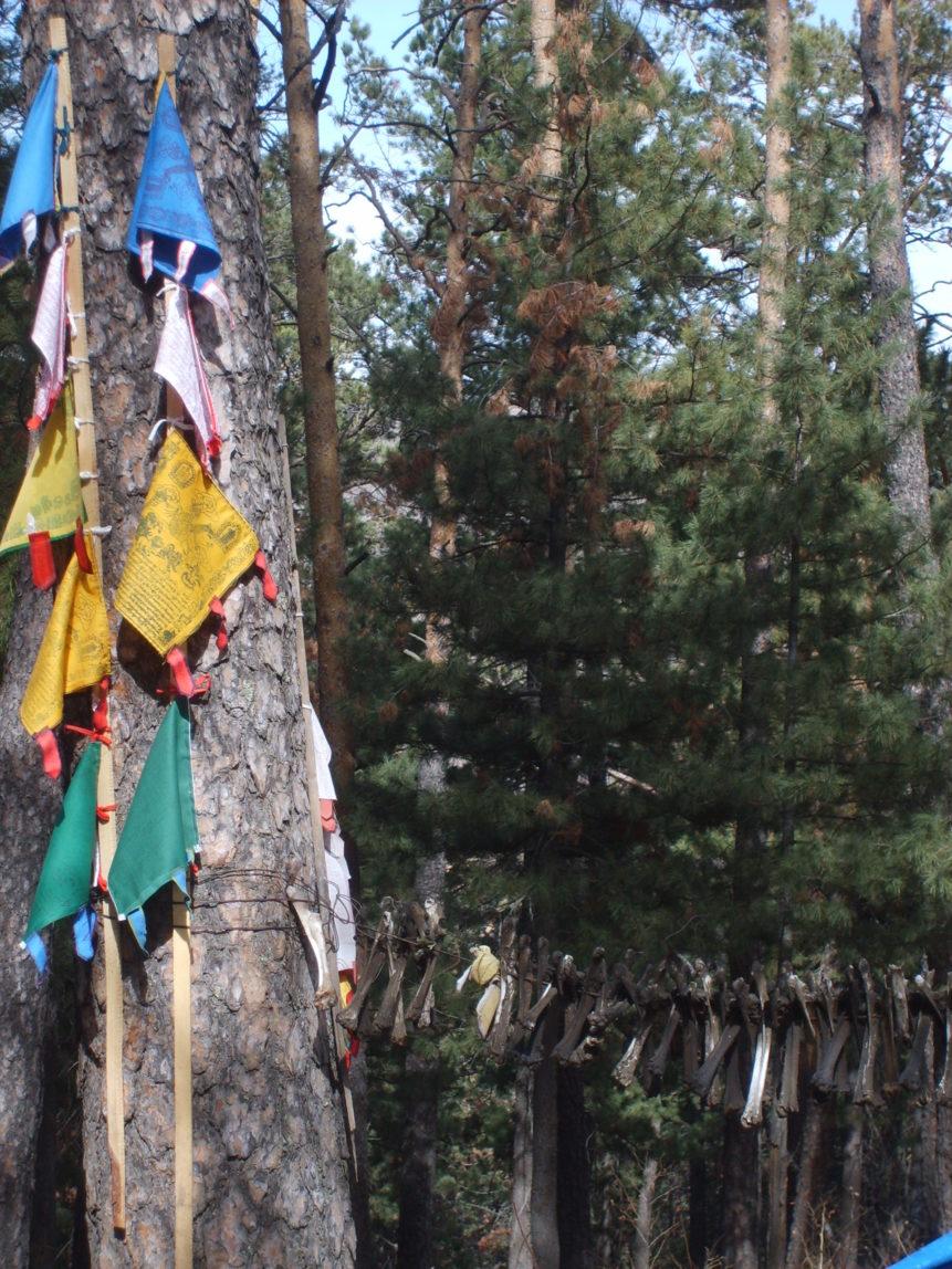Free photo: Shamanic tree in Mongolia