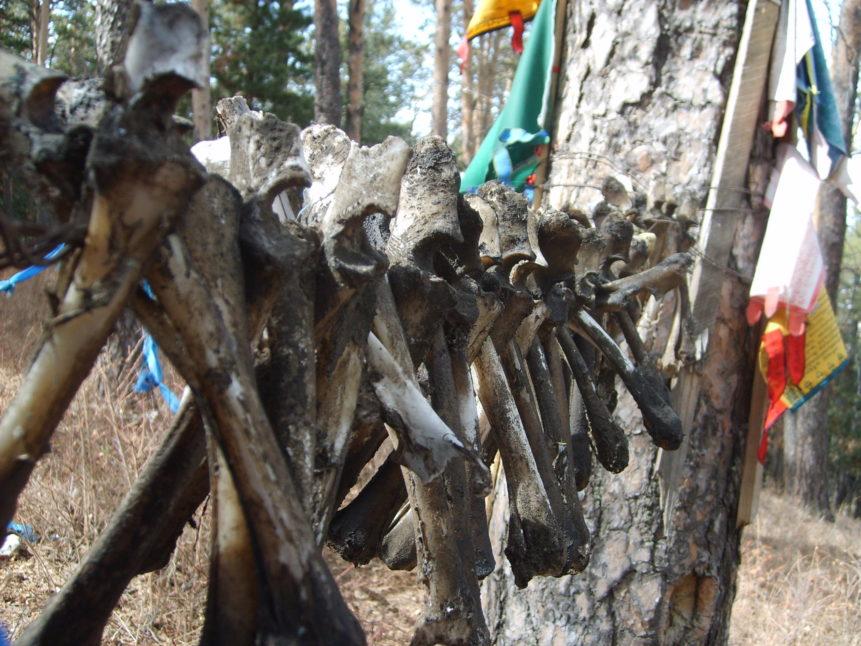 Free photo: Detail of bones, shamanic place in Mongolia