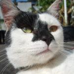 FREE IMAGE: Cat's Face Close Up - Libreshot Public Domain Photos