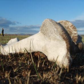 Photo of cow bone