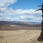 Burned tree in Mongolia