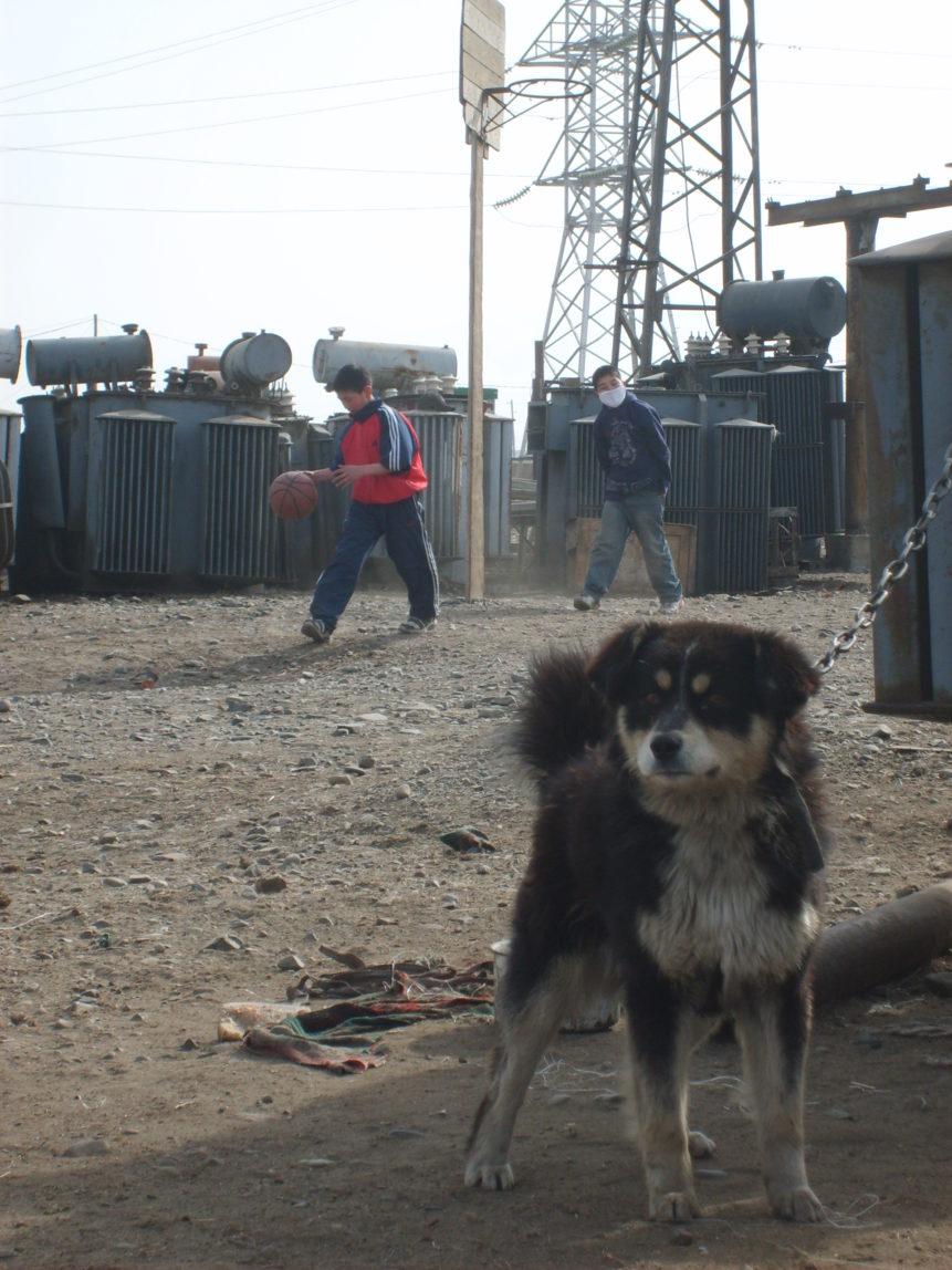 Free photo: Dog in Ulaanbaatar