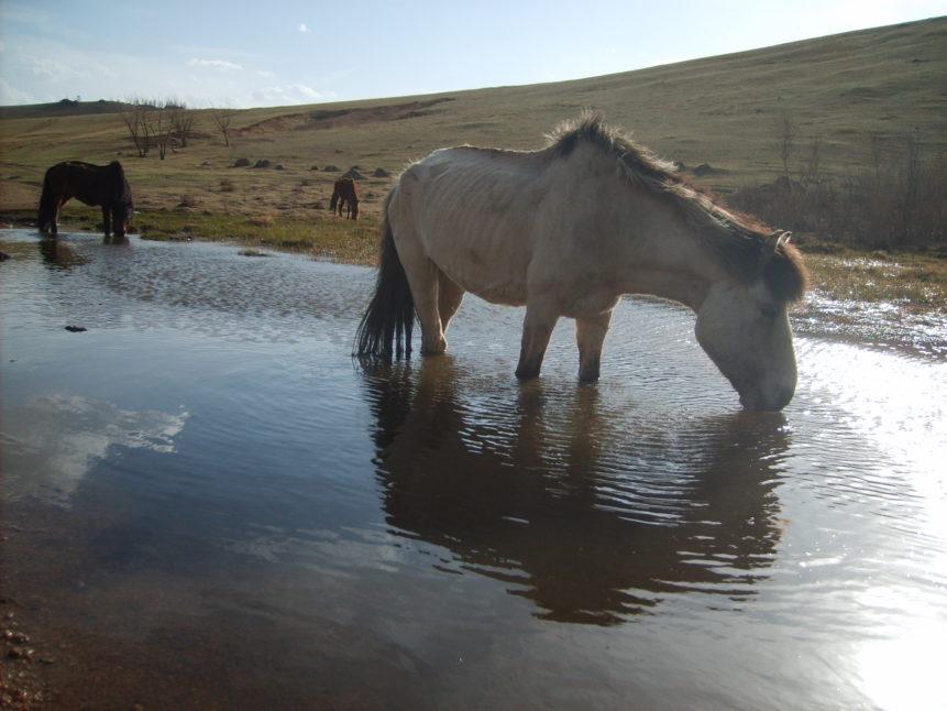 Free photo: Drinking horse