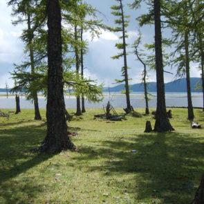 Woods on the lake Khövsgöl