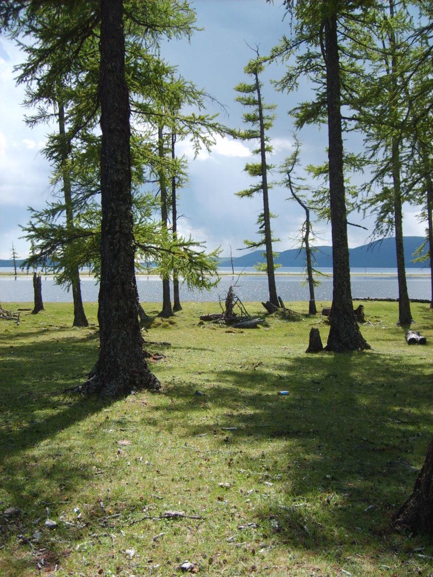 Free photo: Woods on the lake Khövsgöl