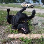 Playing black dog