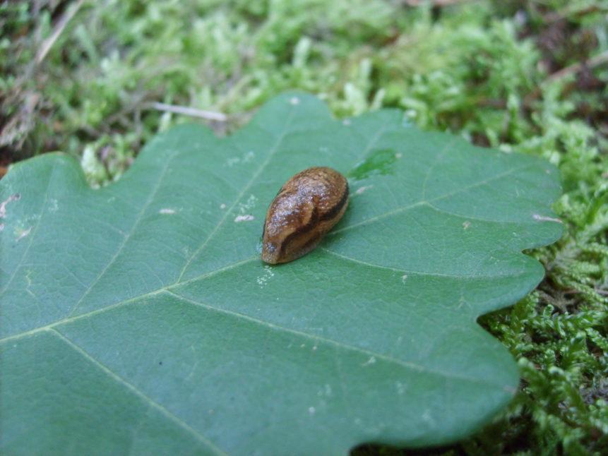 Free photo: Slug on a leaf