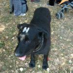 Black dog hologram