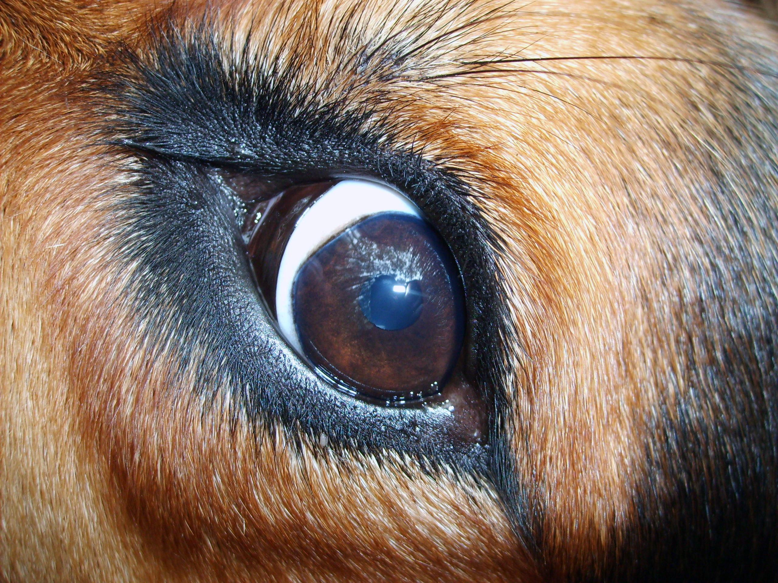 Spot On Dog S Eye