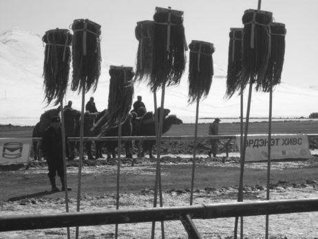 Camel race in Mongolia