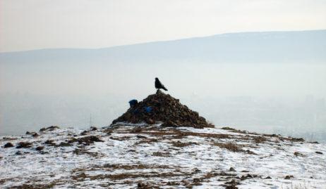 Mongolian ovoo and raven