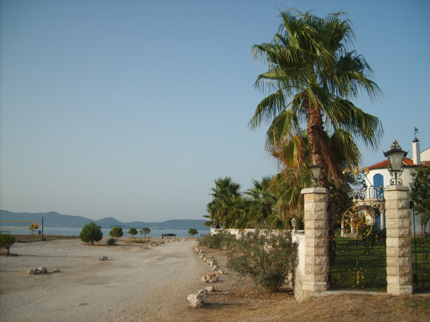 Free photo: Palm in Croatia