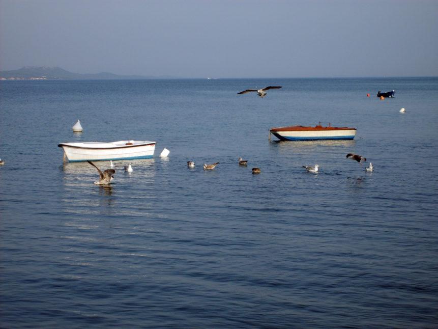 Free photo: Rowboats in Croatia