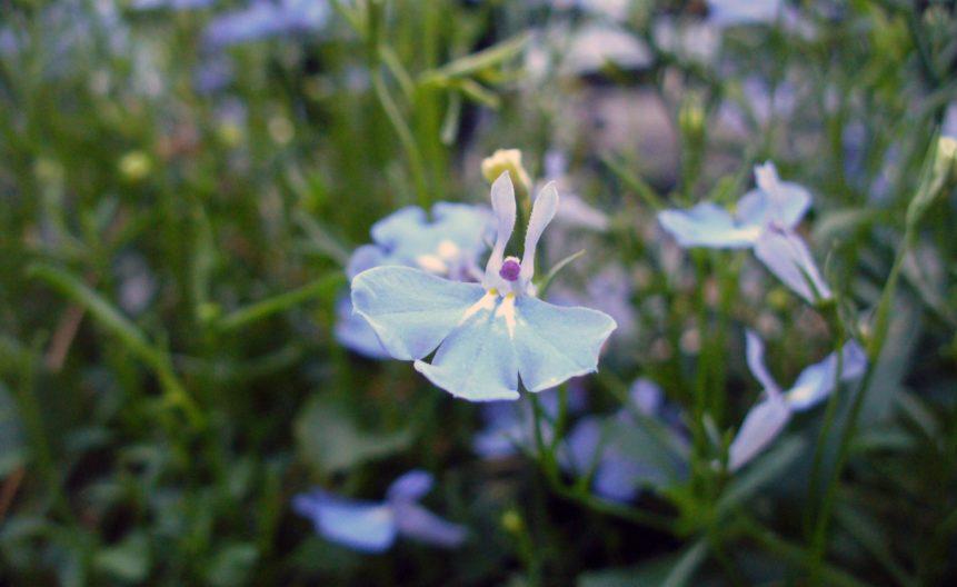 Free photo: Blossom photo