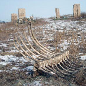 Bones on cemetery