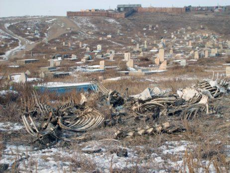 Cemetery in Ulaanbaatar