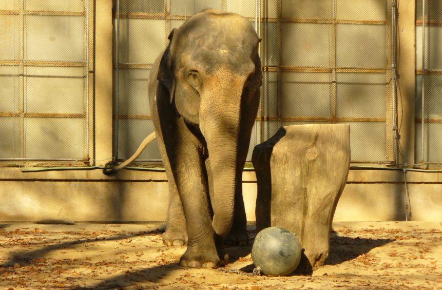 Free photo: Elephant