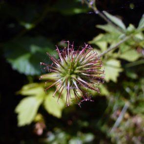 Meadow flowers macro-phot