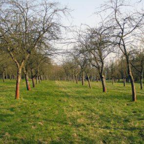 Tree orchard