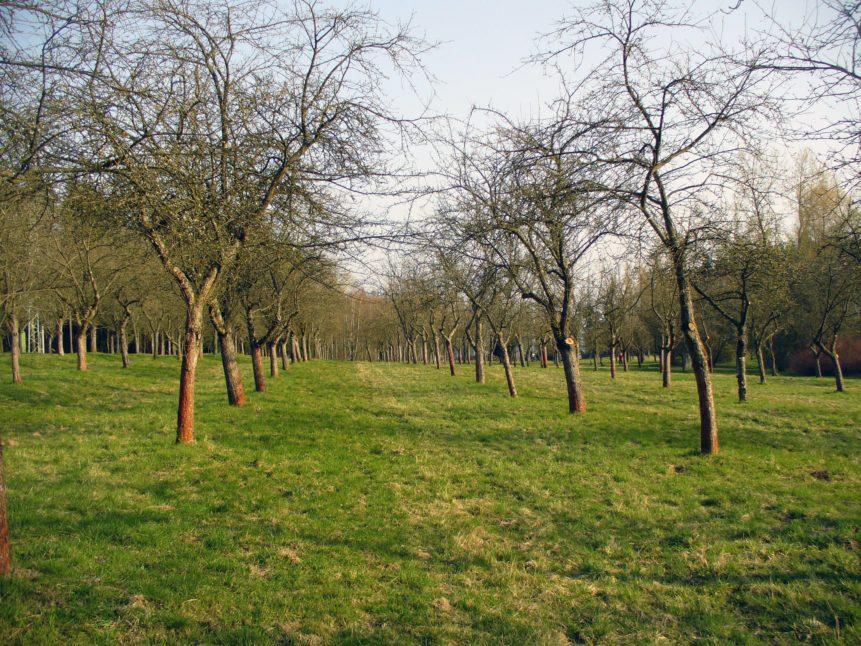 Free photo: Tree orchard