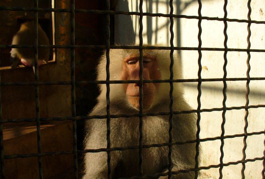 Free photo: Sad Monkey