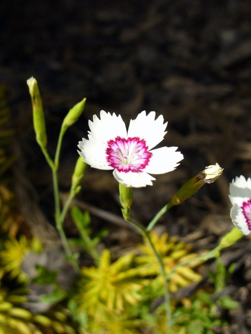 Free photo: White Blossom
