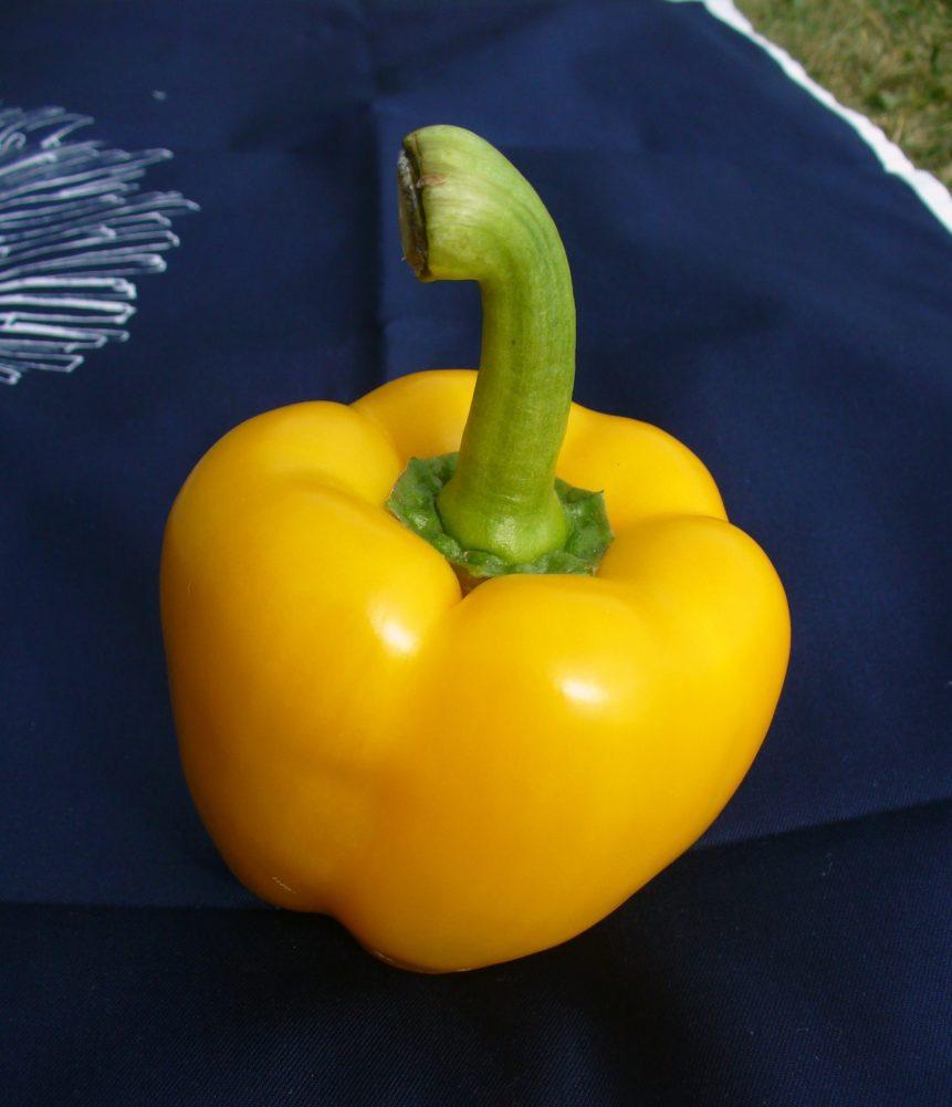 Free photo: Yellow Paprika