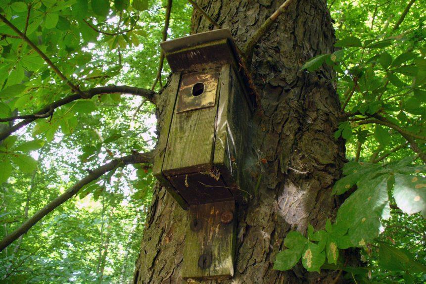 Free photo: Birdhouse