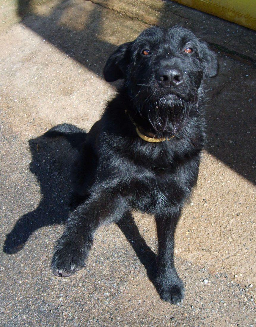 Free photo: Black Dog Gives Paw