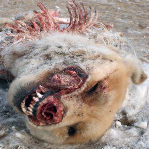 Dead Dog
