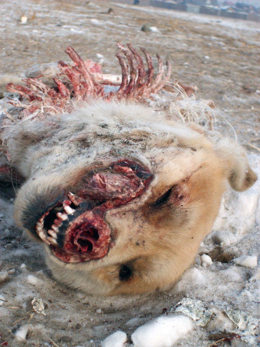 Free photo: Dead Dog