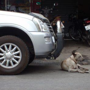 Dog Lying Before Car