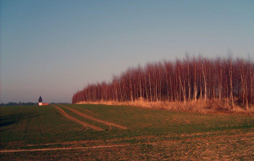 Free photo: Evening Field