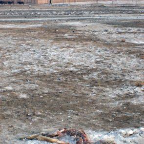 Frozen Dead Dog