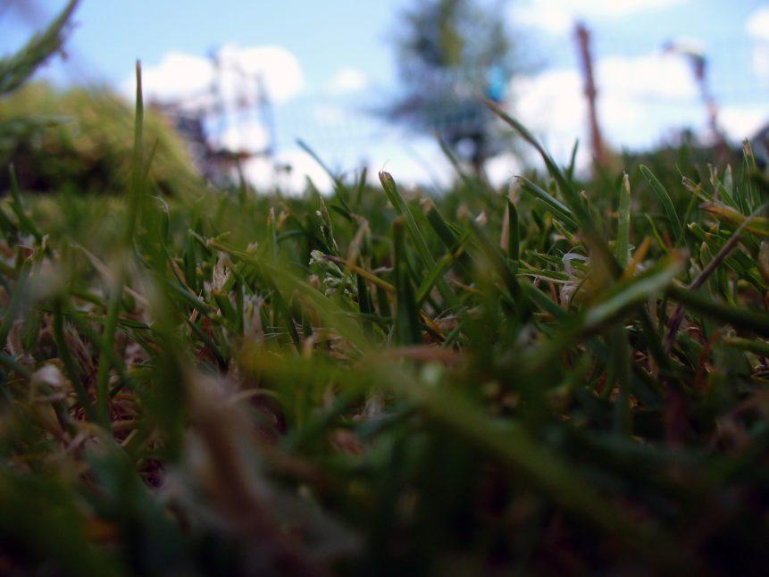 Free photo: Grass Detail