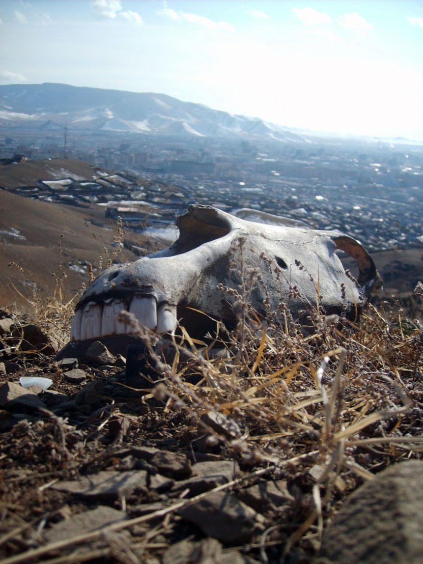 Free photo: Horse Skull In Mongolia