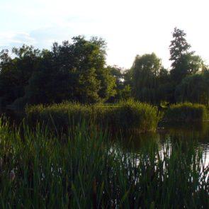 Pond in City Park