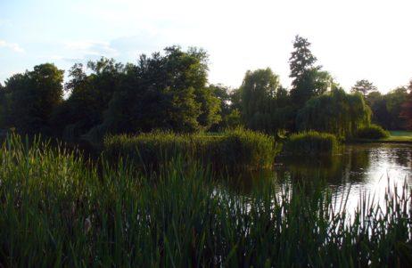 Reed and Lake