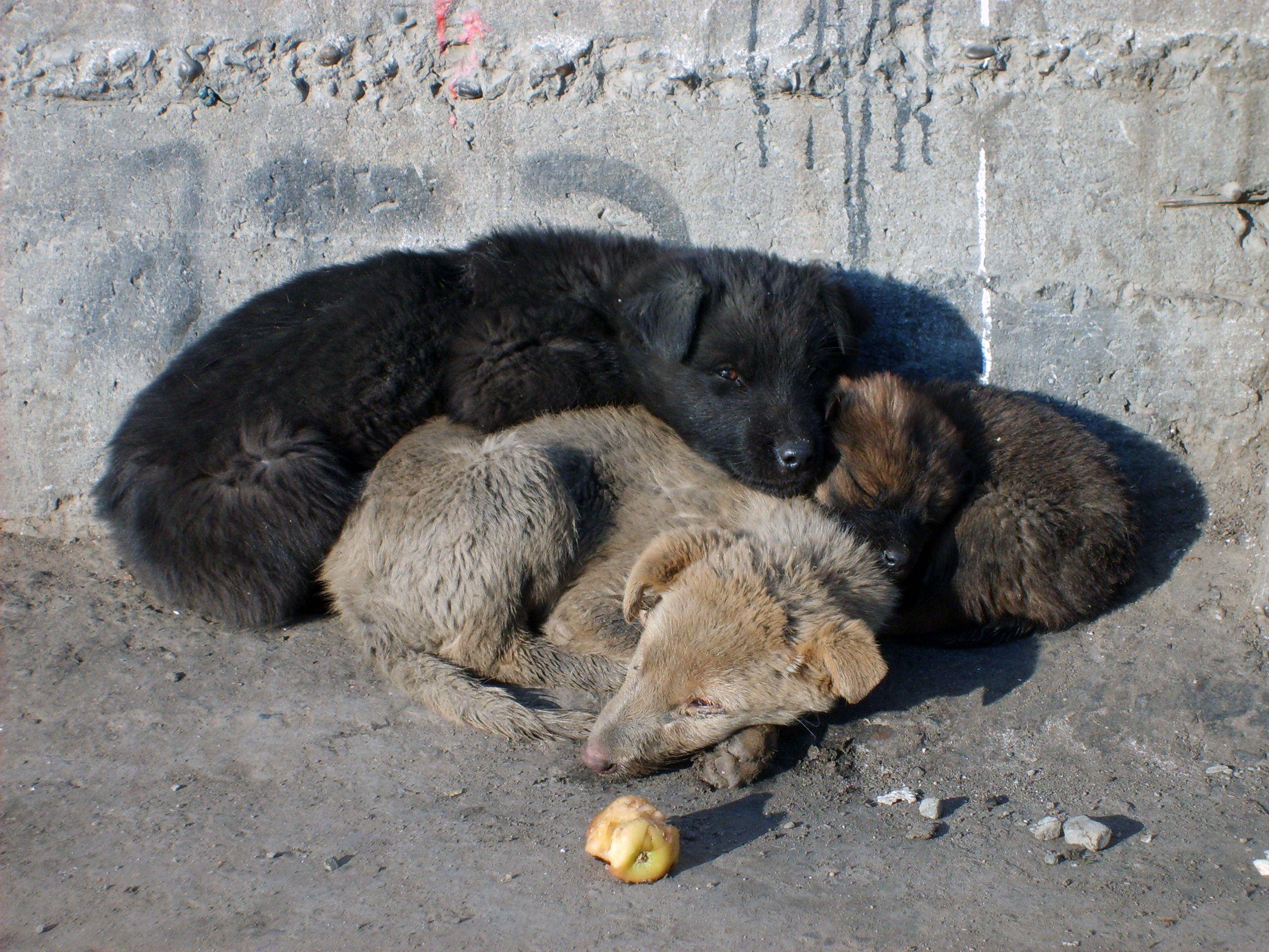 free image: sleeping puppies | libreshot public domain photos