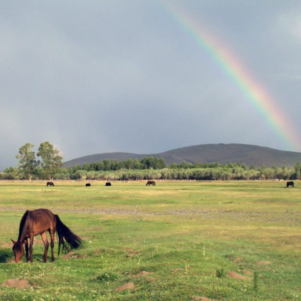 Rainbow and Horse in Mongolia