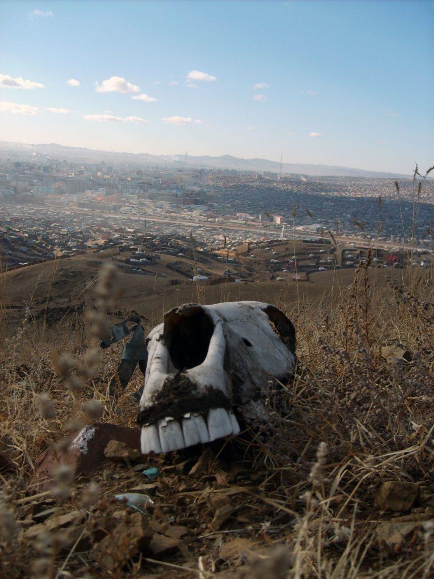 Free photo: Horse Skull