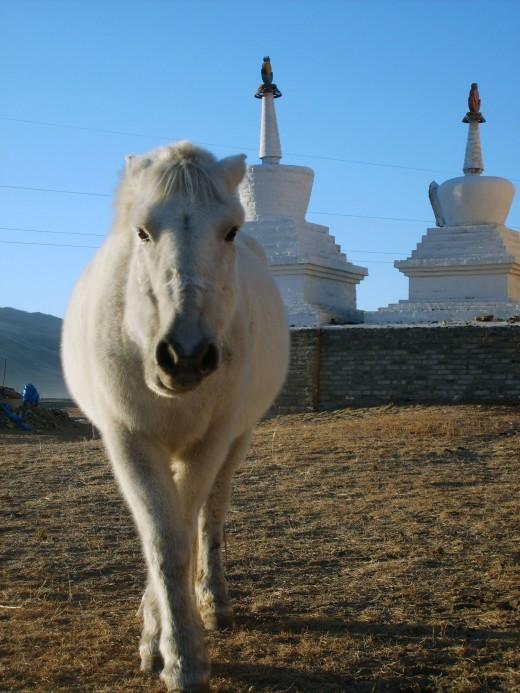 White Horse With Stupas