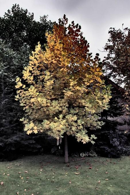 Free photo: Autmn Tree