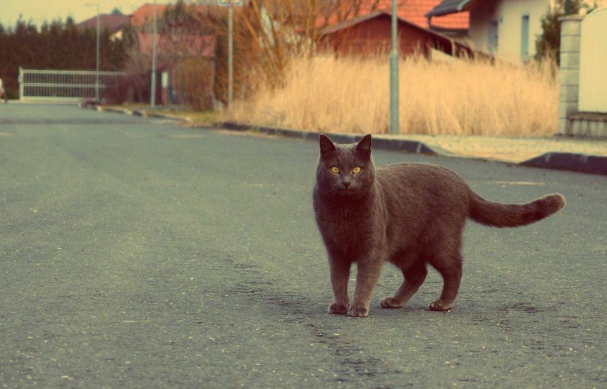 Free photo: Cat