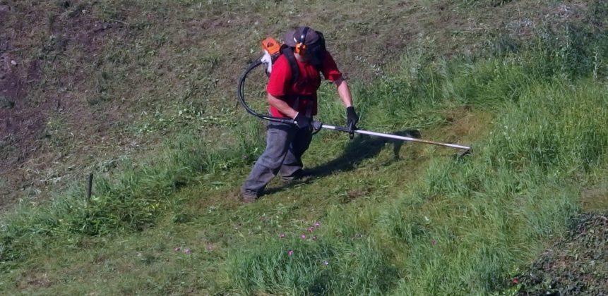 Free photo: Worker Gardener