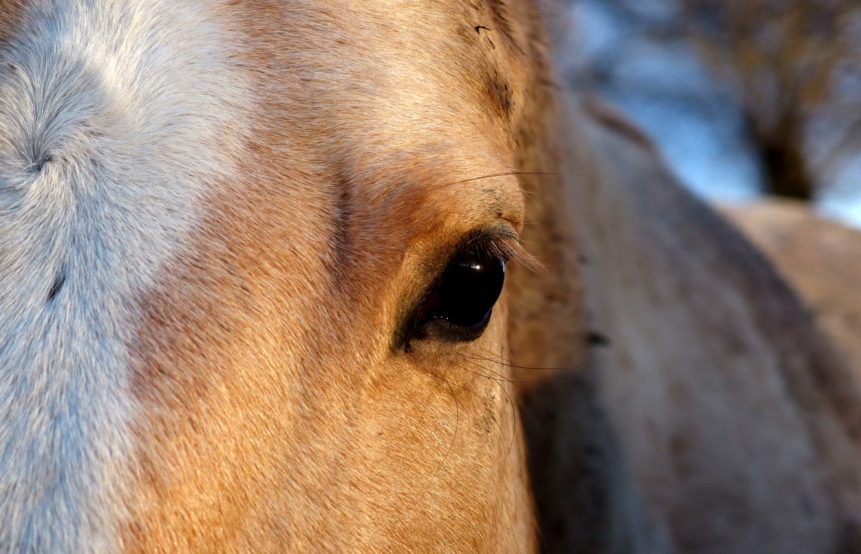 Free photo: The eye of a white horse