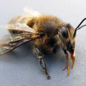 Bee On Macro Photography